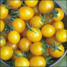 Blondkopfchen heirloom yellow cherry tomato seeds