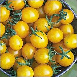 Blondkopfchen heirloom yellow cherry tomato seeds