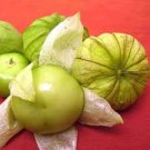 Cisineros Tomatillo  tomato seeds