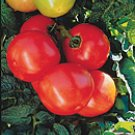 Stakeless F-3 dwarf heirloom tomato seeds