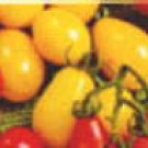 Yellow Plum heirloom cherry tomato seeds