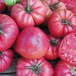 Rose heirloom tomato seeds