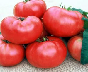 Marianna's Peace heirloom tomato seeds