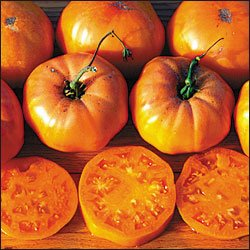 Dr. Wyche's Yellow heirloom tomato seeds