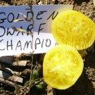 Golden Dwarf Champion heirloom  tomato seeds
