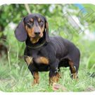 mouse pad DACHSHUND weiner dog mouse mat