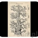 mouse pad TREE OF LIFE evolution genetics darwinism