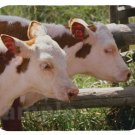 mouse pad HEREFORD CATTLE TWINS montana cow cows
