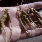 Ginseng Rootlets 2.8 oz