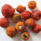 Organic Rosehips 4 oz