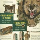 1950 Ad Ethyl gasoline   True Marks of nature   Big Cats