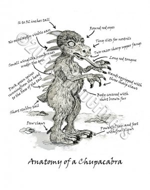 Anatomy of a Chupacabra