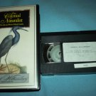 THE COLONIAL NATURALIST~VHS~WILLIAMSBURG~MARK CATESBY~1964~DONALD MOFFATT