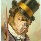 Dressed Bulldog - Top Hat & Whip - 103