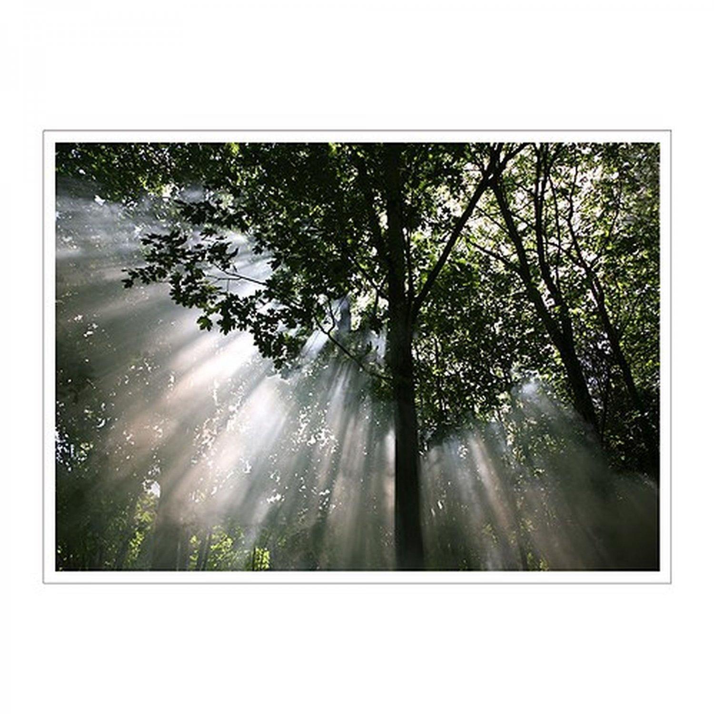 IKEA Premiar CRESCENDO OF LIGHT Trees Forest Canopy CANVAS WALL ART Print HUGE Mandala PREMI�R