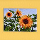 SUNFLOWERS Spring, Yellows, Greens & Blue Botanical Matted Print, Renee Rutana