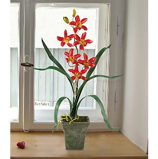 Cymbidium Orchid with Vase (Set of 3) in Assorted Colors