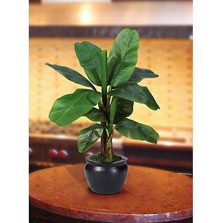 Banana Silk Palm Tree w/Black Vase 22 in