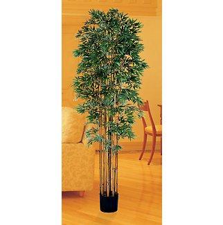 Bamboo Japanica Silk Tree 6 ft