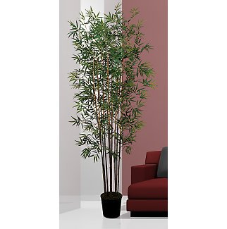 Mini Bamboo Tree 6 ft