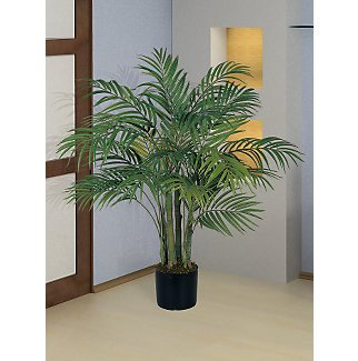 Areca Silk Palm Tree 3 ft