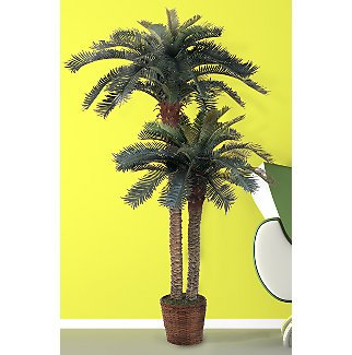 Double Potted Sago Palm Silk Tree 6ft and 4ft