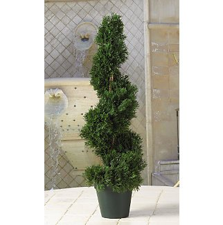 Cedar Sprial Tree 2 ft
