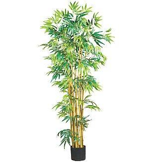 5' Multi Bambusa Bamboo Silk Tree