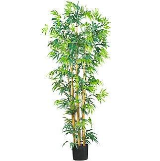 6' Multi Bambusa Bamboo Silk Tree