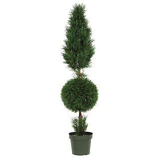 Cypress Ball and Cone 5' (Indoor/Outdoor) Silk Tree