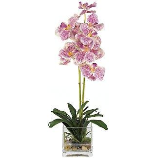 Vanda w/Glass Vase