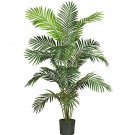 Paradise Palm Silk Tree 6'