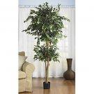 Double Ball Ficus Silk Tree 6'