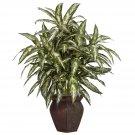 Aglaonema Silk Plant
