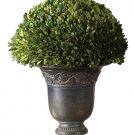 Preserved Boxwood Globe - Planter by Uttermost