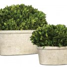 Preserved Boxwood - Oval Domes (Set of 2) by Uttermost