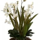 Moth Orchid Planter by Uttermost