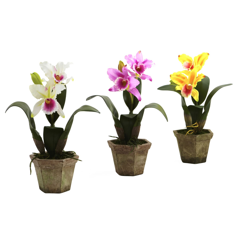 Cattelya Orchid with Vase (Set of 3)