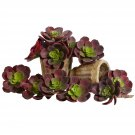 "Burgundy 5"" Echeveria Succulent Plant (Set of 12)"