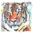 """Tiger"" Watercolor Painting Print"