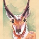 """Wyoming Pronghorn Antelope"" Watercolor Painting Print"