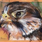 """Peregrine Falcon"" Watercolor Painting Print"