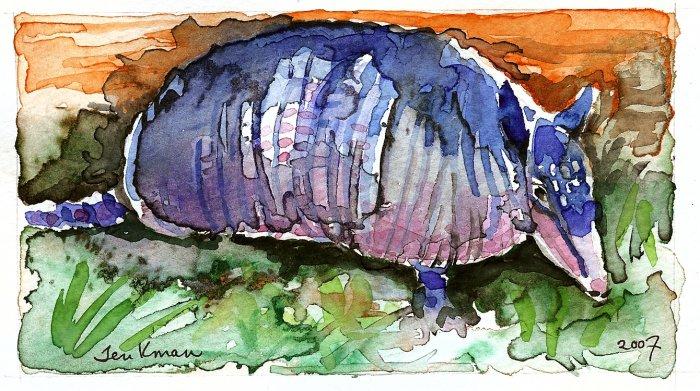 """""""Texas Armadillo""""  Watercolor Painting Print"""