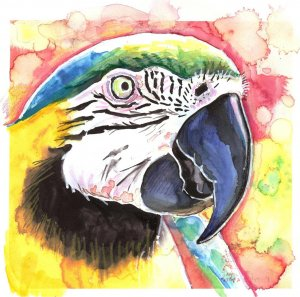 """""""Parrot (Macaw)"""" Watercolor Painting Print"""