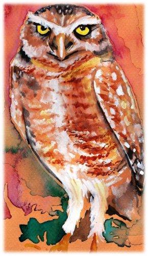 """Burrowing Owl"" Watercolor Painting Print"