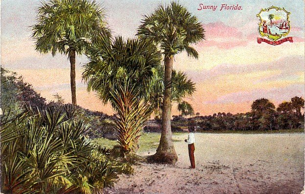 Scene in Sunny Florida FL, Artistic Series Vintage Postcard - 3590