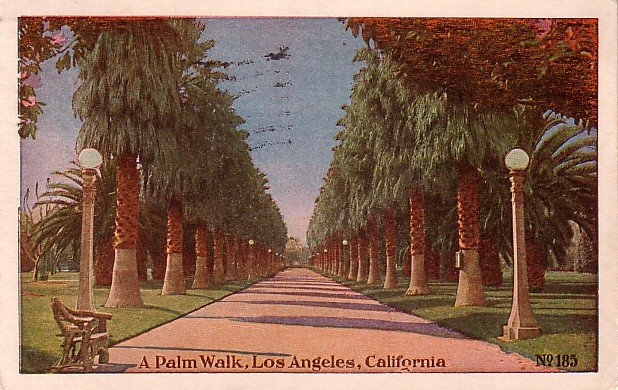 A Palm Walk, Los Angeles California CA Vintage Postcard - 3901