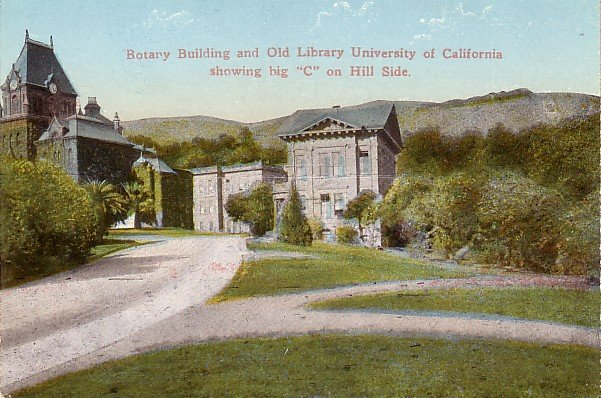 Big C Hillside Letter on Charter Hill, University of California in Berkeley CA Postcard - 3902