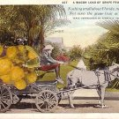 Exaggerated Grapefruits on Wagon 1929 Curt Teich Vintage Postcard - 0061