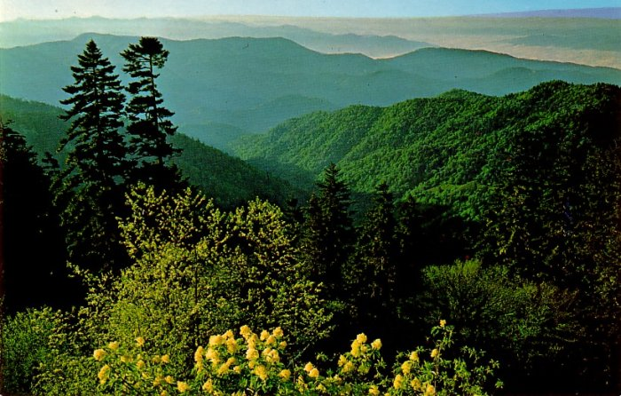 Looking Down into North Carolina from Clingman's Dome Chrome Postcard - 0125